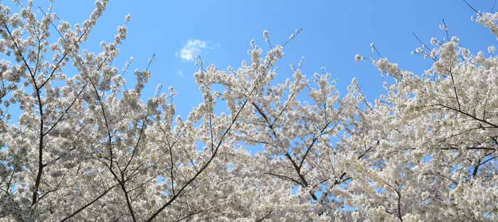 Spring is a wonderful time to enjoy shopping, dining, and the wonderful sights in Lansdale, Montgomery County PA